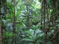 Queensland, Rain Forests