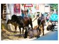 Street life in Kolkata (1)