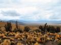 Parque nacional Volcan Isluga