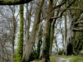 Somerset---Woods