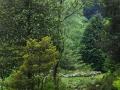 Lago Maggiore - Giardino Botanico Alpinia