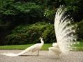 Lago Maggiore - Isola Bella - Uccellini vari ed eventuali (3)