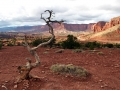 Capitol Reef National Park - Utah (4)