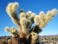 Joshua Tree National Park - California (1)