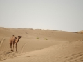 Karakum Desert - On the verge of hell (4)