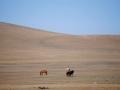 Mongolia, Panorami