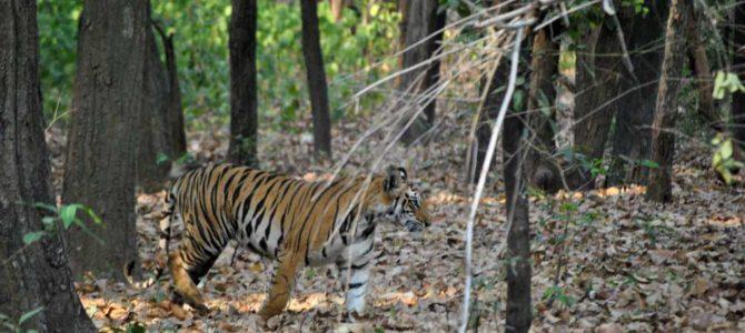 Quella volta che ho visto la tigre e ho pianto
