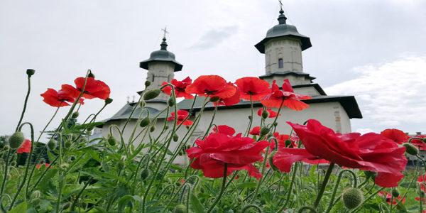 Bucovina monasteries